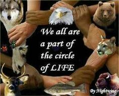 Mother Earth Hear Our Prayer - (Elk Spirit Song by Paul Cheoketen Wagner) Native American Wisdom, American Spirit, Native American Indians, Native Americans, Native Indian, Native Art, Spirit Song, We Are All Connected, Human Kindness