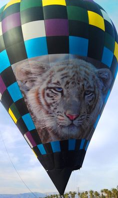 White Tiger hot air balloon at Empire Polo Club.  www.balloonabovethedesert.com