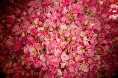 Iran..Rose Water
