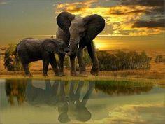 #Africa #Elephants #Safari