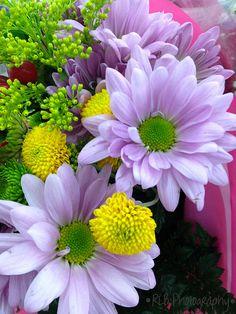 light purple daisies.