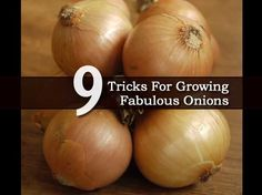 9 Tricks For Growing Fabulous Onions