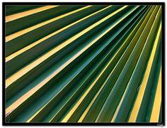 Palmine skaline Plant Leaves, My Photos, Plants, Plant, Planets