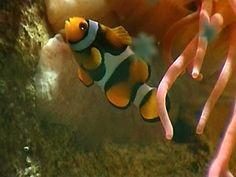 Een vis hoort in het water. Sommige vissen leven in zoet water, zoals de karper of de snoek. Andere houden juist van zout water uit de zee, zoals haring, garnalen en haaien.