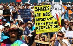 Pictures of the thousands of people that protested against the shark cull this weekend in Australia