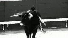 "Spot anti-corrida, ""spectacle"" barbare et cruel. Enregistré par Renaud."