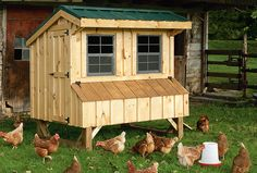 """Quaker"" coop with pine board and batten siding and metal roof"
