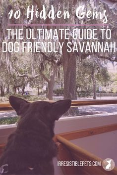 Looking for a dog friendly vacation- Savannah, GA is full of hidden gems perfect for a dog friendly getaway! Get the Ultimate Guide at IrresistiblePets.com