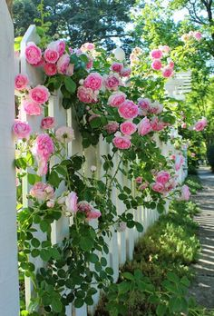 Vertical garden - Admirable Eden Rose Garden To Enhance Your Beautiful Garden Amazing Gardens, Beautiful Gardens, Beautiful Flowers, Pink Garden, Dream Garden, Rose Garden Design, Eden Rose, Front Yard Design, Front Yard Landscaping