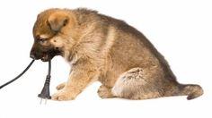 Conoce los peligros a los que está expuesta tu mascota en casa