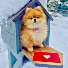 Awwww I'd love to find him in my mailbox