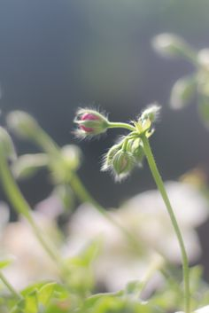 Sabine Franke De vierde dag van #synchroonkijken, mijn 'schoonheid'..  zon, natuur en zijn beloop! (groei)