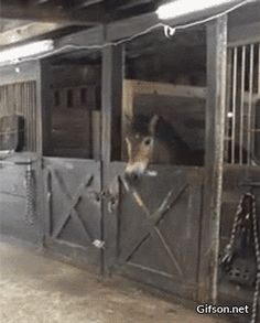 When the barn owner leaves the feed room door unlocked oh my god Too Funny. Horse gif