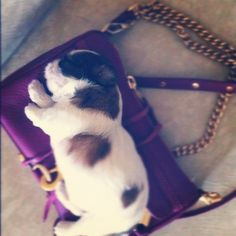 She's not leaving without me!    #cute dog #funny dog #dog #cute animals #pooch #puppy #doggie #doggy