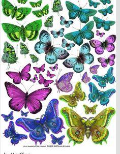 Kelebek buterfly