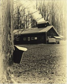 Won't be long now!  Geauga County Maple Festival (April)