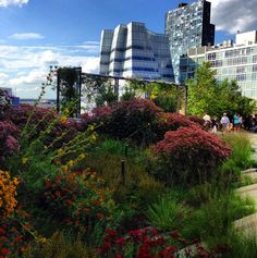 The High Line in New York City is a breathtaking study in contrasts. (I spent a wonderful day with my granddaughter at the High Line and then lunch at Artichoke Basil (hope I got that right) for yummy Artichoke Pizza!)