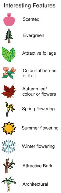 Plant Charts for Coastal Gardens and Exposed Sites - charts list what their interesting features are and how well they tolerate the wind and salt - via Thompson and Morgan
