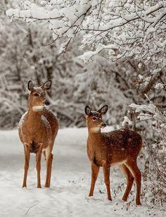 starrydiadems:  funkysafari:  Winter Morning Sapsucker Woods, Ithaca, NYbyIthacaBarbie  via faedelaforet