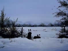 Border Collies in snow-acrylic on canvas