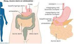 Afbeeldingsresultaat voor diabetes mellitus insuline