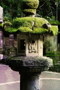 Japanese Magical Lantern. In our personal garden, we're trying to culture the moss to grow just like in this photograph.