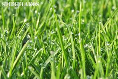 Whether you're just getting your hands dirty for the first time, or already have calluses from digging, here are some tips and chores for the May lawn and garden. Lawn And Garden, May, Herbs, Landscape, Plants, Gardening, Scenery, Herb, Plant