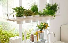 Whether in the kitchen or on the terrace: A herbal shelf looks good everywhere … - Easy Diy Garden Projects Decor, Herbs Indoors, Home And Garden, Garden Projects, Shelves, Build Your Own, Backyard Decor, Home Decor, Diy Garden Decor