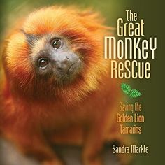 The Nonfiction Detectives: The Great Monkey Rescue. Markle's latest nonfiction book for middle grade readers isn't a mystery, instead the story is structured in the form of a problem and solution.  The Great Monkey Rescue describes the plight of the endangered golden lion tamarins in the Brazilian rain forest. The engaging narrative is perfect for upper elementary readers in grades 3-5.