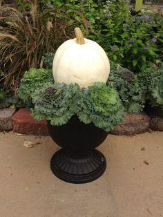 Planting a versatile Fall Planter with Ornamental Kale adding a White Pumpkin
