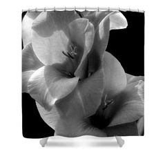Gladiola flower in black and white floral shower curtain.  Photography by Susan.
