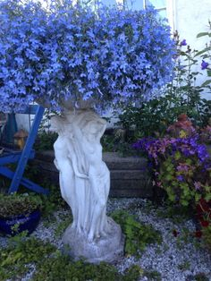 Lobelia er en fantastisk sommerblomst - dette er min yndlingsfarge (blåveisblå) - den finnes også i i cerice, lys rosa, mørk blå, hvit og mellomblå - Blomstrer hele sommeren helt til frosten kommer og kan anbefales!!/ Lobelia is a wonderful flower and this is my favorite color (almost as hepatica-blue)