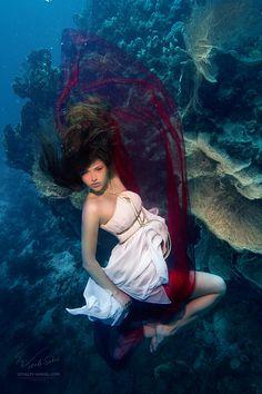 Underwater Dace. Fashionable by *Vitaly-Sokol on deviantART