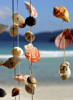 Wind Chime...Use fishing line and would look great in a beach bathroom and easy to clean . . . just take down and run under water.