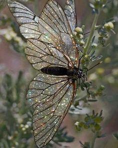 HD Glass Shiny Butterfly