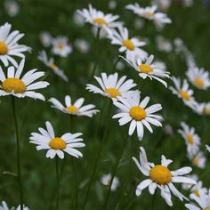 The Golden Ratio and Feng Shui Feng Shui, Golden Ration, Human Dna, Grace, Famous Places, Voici, White Flowers