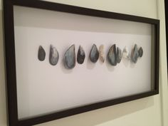Framed sea shells from South Africa