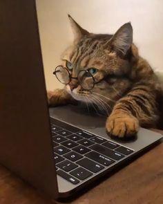Cute Cat Memes, Funny Cute Cats, Cute Baby Cats, Funny Cats And Dogs, Cute Cats And Kittens, Cute Little Animals, Cute Funny Animals, Kittens Cutest, Cute Animal Videos