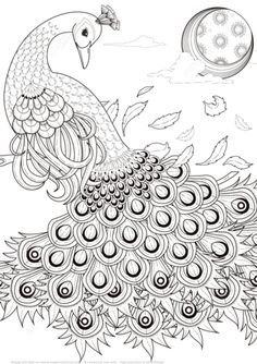 Graceful Peacock coloring page from Peacocks category. Select from 21143 printable crafts of cartoons, nature, animals, Bible and many more.