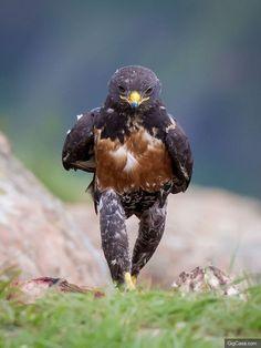 這原本只是一張小鳥走路的普通照片,但在經過PS達人的魔手後...每一張都超有梗!拜託讓人家好好走路啦XDD