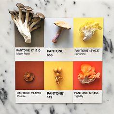 A designer Lucy Litman combina alimentos deliciosos com suas respectivas cores, de acordo com as amostras da Pantone. Conheça o projeto Pantone Posts!