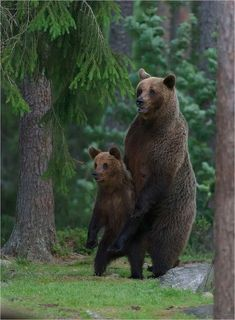Bear with cub# Wonder what they see