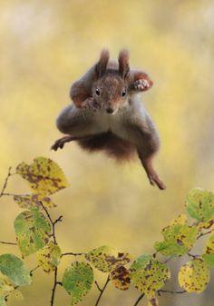 "Previous pinner said, ""magicalnaturetour: Kungfu Squirrel by Julian Rad"""
