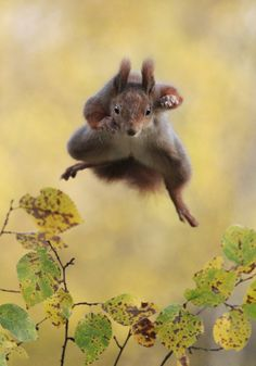 Kungfu Squirrel by Julian Rad