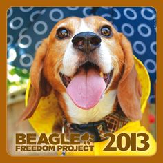The Beagle Freedom Calendar celebrates the lives of beagles who were freed from the horrors of animal testing labs. These beagles now have loving forever homes and are enjoying their new found freedom. For the first time, they are not locked behind bars. They can run with grass beneath their feet, feel the sun on their backs, and are finally learning that some humans will love and care for them. Pre order it now and save a life!
