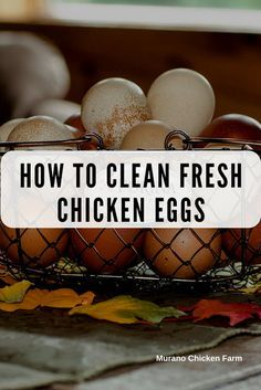 How to clean fresh chicken eggs. Do you need to wash fresh eggs? Well, there's a long answer and a short answer but don't worry I'll tell you both! Counter and refrigerator storing methods for farm eggs. Eggs How to clean fresh eggs Raising Backyard Chickens, Backyard Chicken Coops, Keeping Chickens, Diy Chicken Coop, Pet Chickens, Backyard Farming, Food For Chickens, Chicken Feeders, Urban Chickens