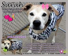 SARAH – A1097476  Pretty sweet dog soon on death list! If you would like to foster or adopt and can't make it to the shelter, please write an email NOW to the Urgent Help Desk at Helpdogs@Urgentpodr.org Their experienced volunteers will assist you one-on-one with rescues and the application process. Transport can be arranged by rescues to the homes of approved fosters or adopters within 3-4 hours of New York City