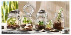 Home - Bormioli Rocco Terrarium, Planters, Herbs, Vegetables, Tableware, Home Decor, Popup, Images, Easter