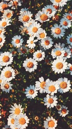 Are you looking for inspiration for background?Browse around this site for cool background inspiration. These cool background pictures will make you happy. Tumblr Wallpaper, Iphone Background Wallpaper, Nature Wallpaper, Wallpaper Plants, Wallpaper For Phone, Background Images, Iphone Spring Wallpaper, Lock Screen Wallpaper Iphone, Iphone Wallpaper Glitter
