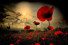 Anzac lest we forget ♥ Anzac Day Quotes, Remembrance Day Quotes, Remembrance Day Poppy, Remembrance Day Pictures, Flanders Poppy, Flanders Field Poppies, Poppy Images, Very Nice Pic, We Are The World